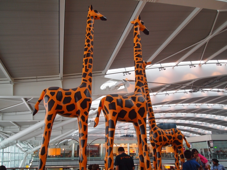 Giraffes in Giraffe Cafe