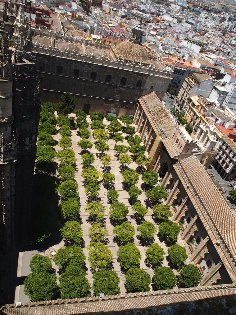 the courtyard of 60 orange trees from Giralda Tower