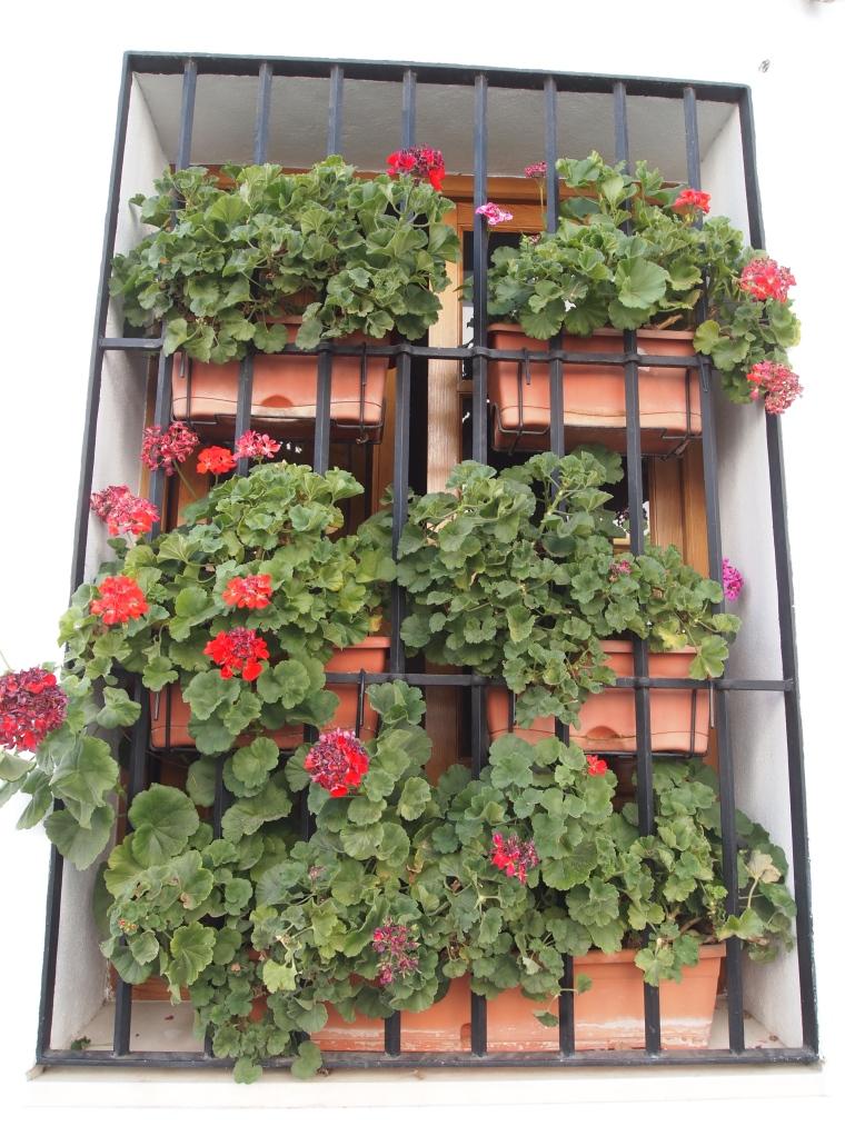 flower-bedecked window