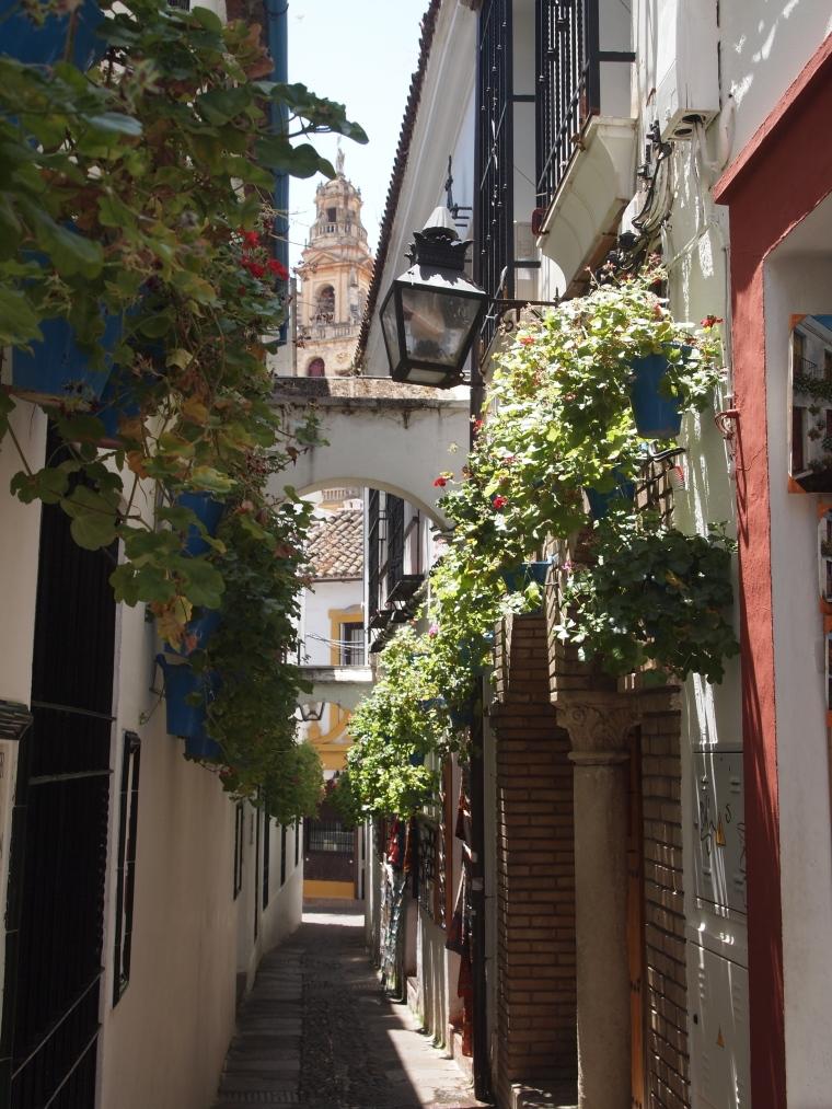 flower-lined alleyways in Cordoba