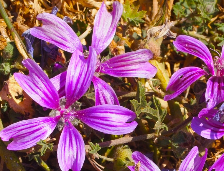 wildflowers in El Torcal, Spain