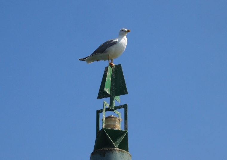 seagull on a stick