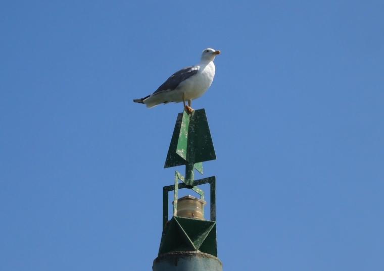 seagull on a stick