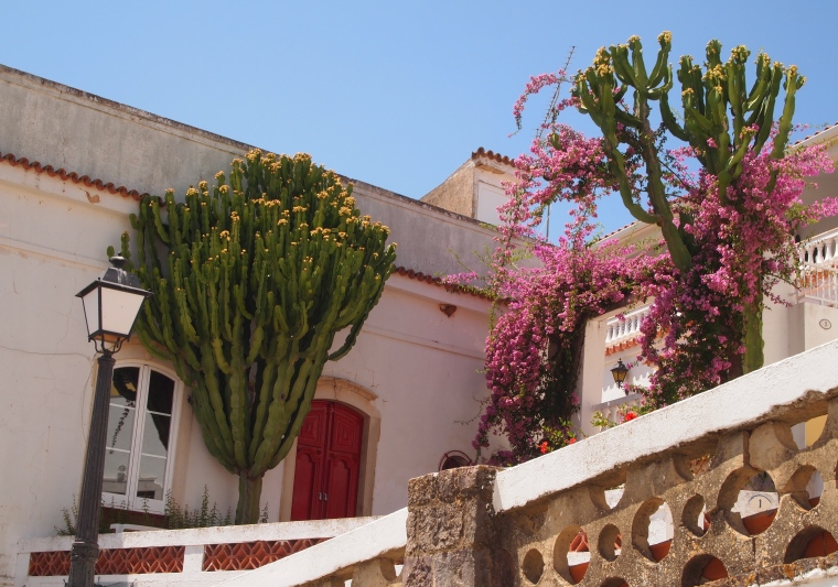 interesting plants and architecture
