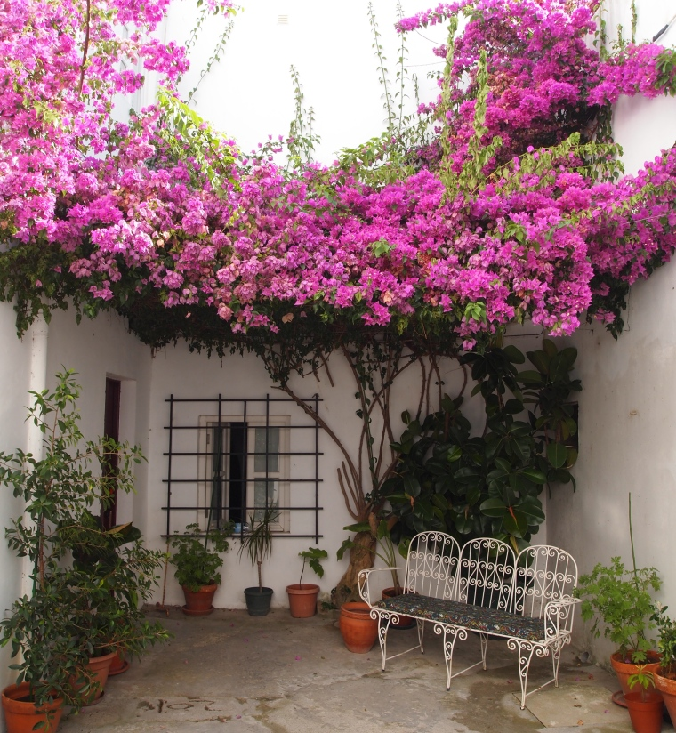 Pensão Policarpo's patio
