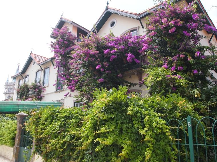 Houses along Rua Dr. Alfredo Costa