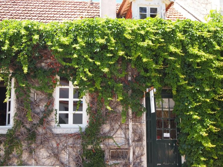 pretty vines