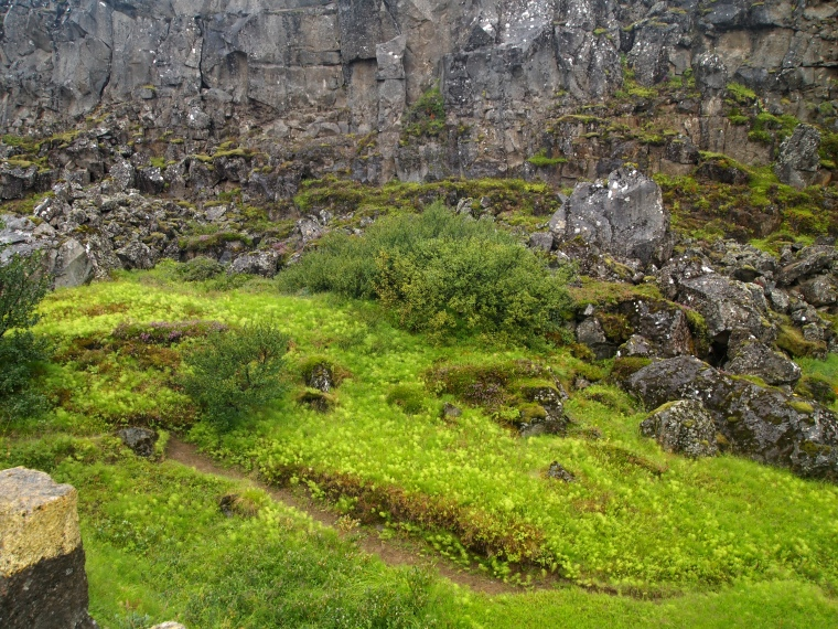 the greens of Iceland