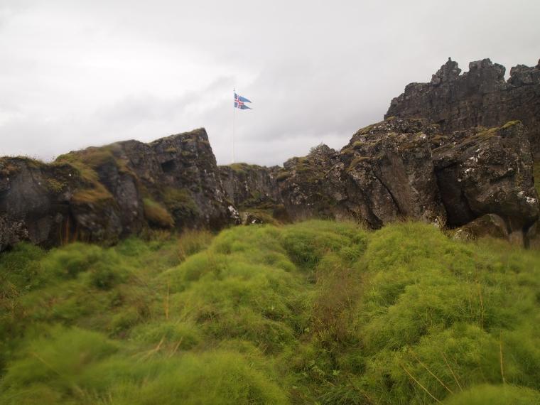 green foliage of Iceland