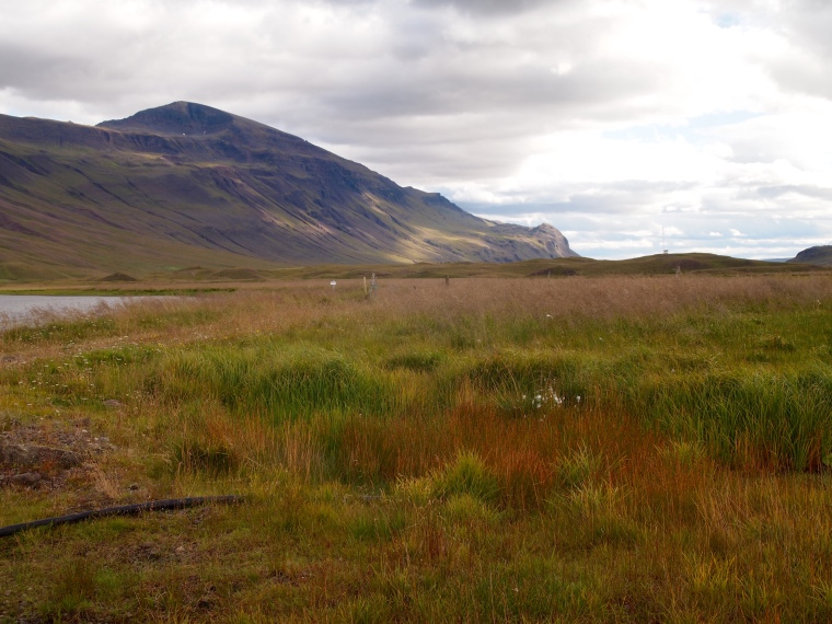 more grasses and peaks