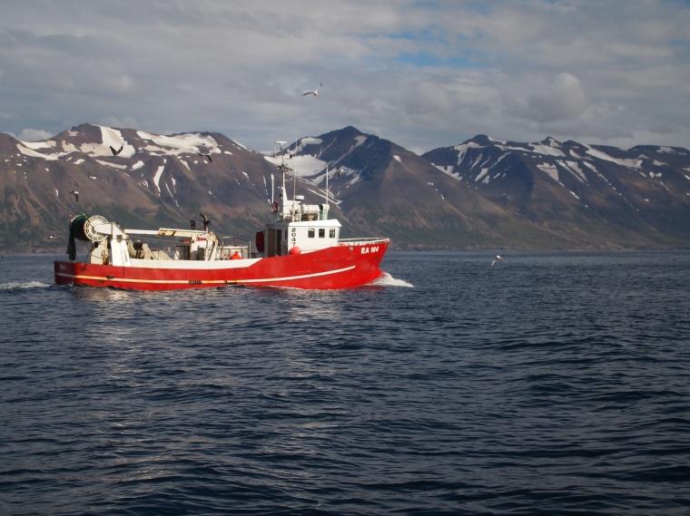 boat and gulls on Eyjafjörður