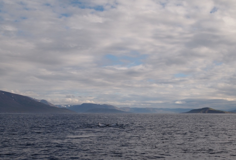 glimpses of whales