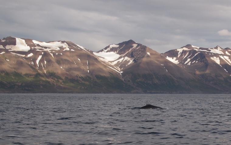 whale spottings