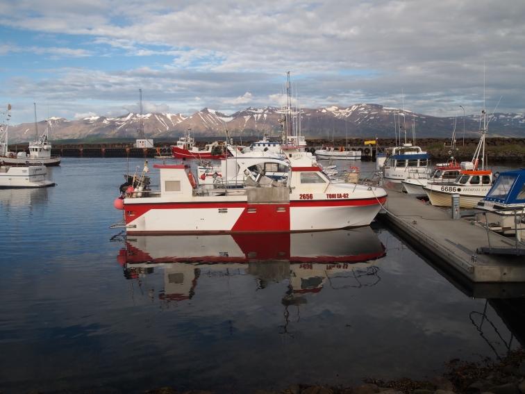 Dalvík marina
