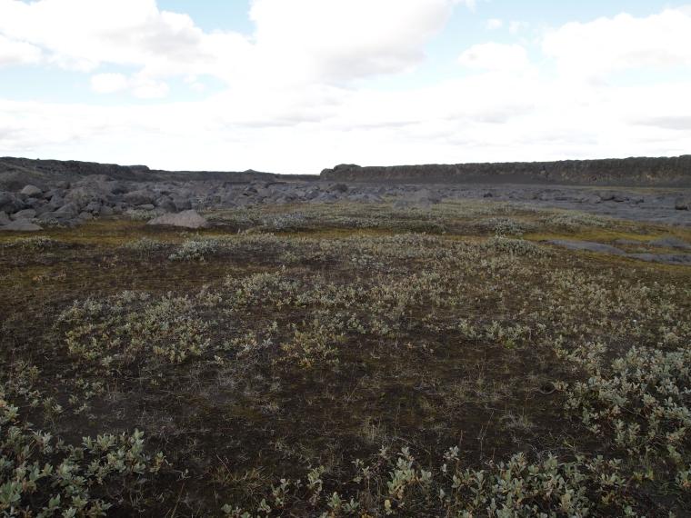 the long barren walk to Dettifoss