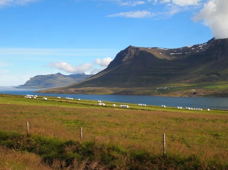 bales of hay wrapped in plastic along Seyðisfjörður