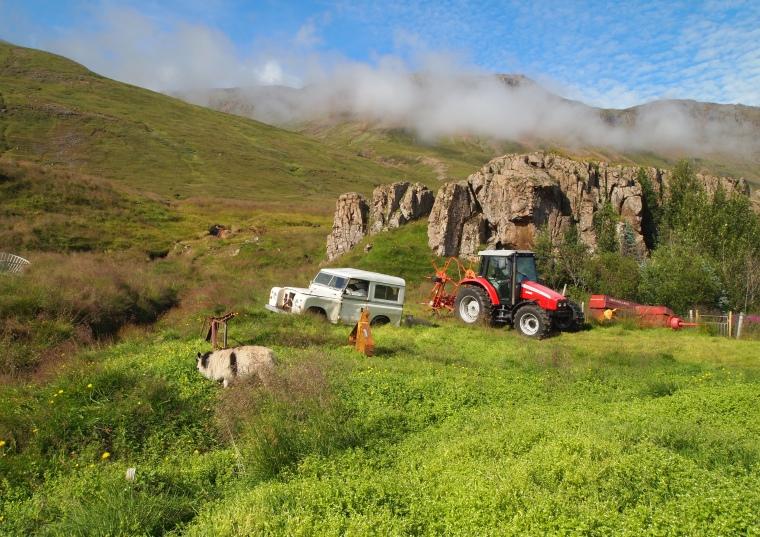 a junkyard in a pastoral landscape