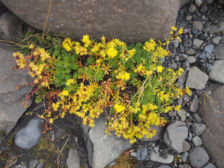 wildflowers eking out a living on the rocks