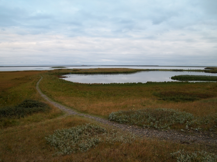 marshy path on the promontory Ósland, along Hornafjörður