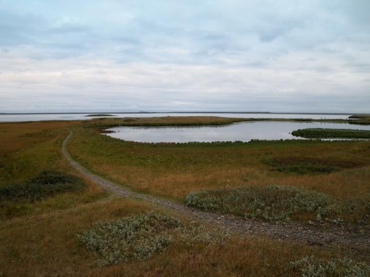 marshy path on the promontory Ósland, along Hornafjörður