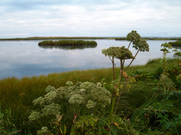 the marsh path