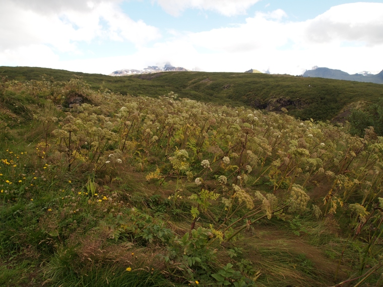 Climbing through Vatnajökull National Park to Svartifoss