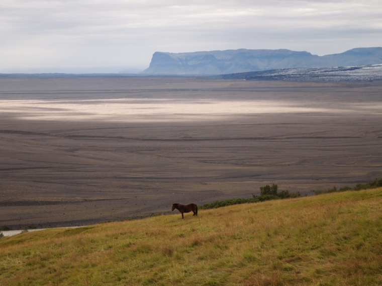 an Icelandic horse with the sandur behind