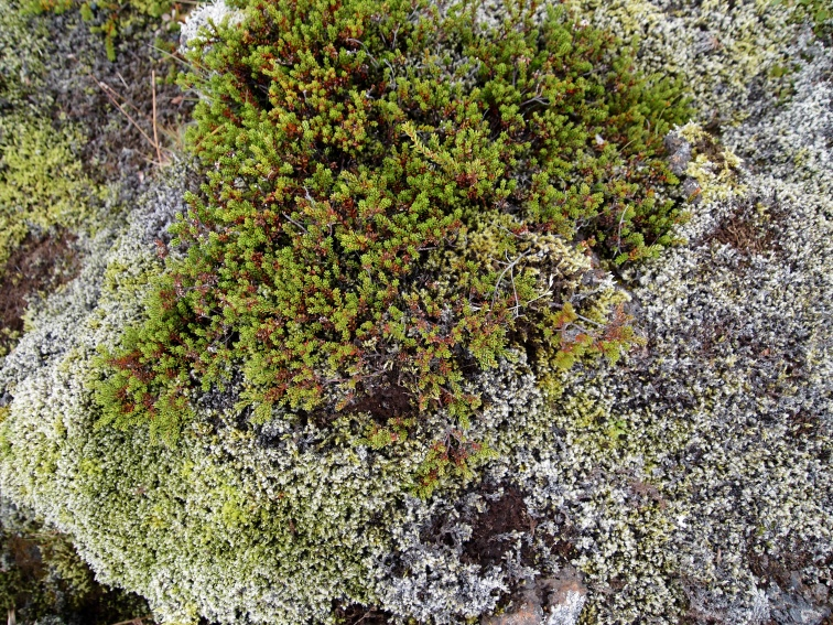 the moss - up close and personal