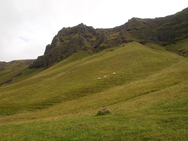 sheep dotting the slopes