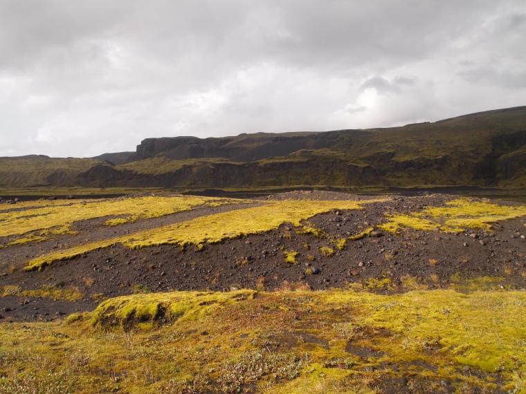 mossy environs