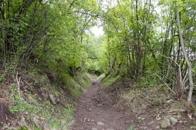 path to Fellegvár