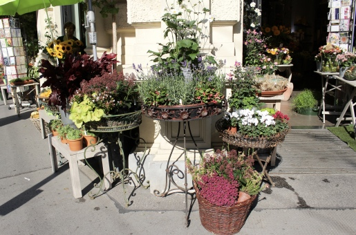 flower shop in Vienna