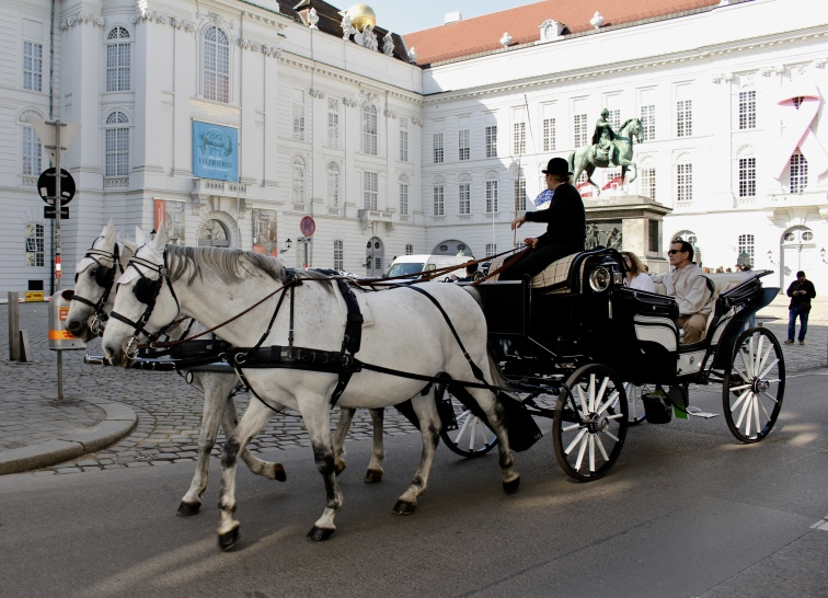 horse & carriage in Vienna