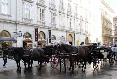 horses and buggies around St. Stephen's Cathedral