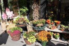 flowershop in Vienna