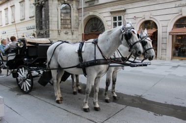 horses & buggies around St. Stephen's Cathedral