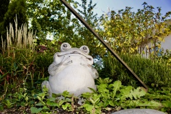 frog at the house