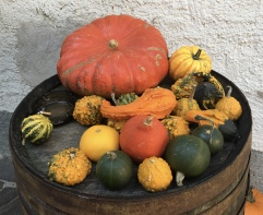 pumpkins and gourds in Dürnstein